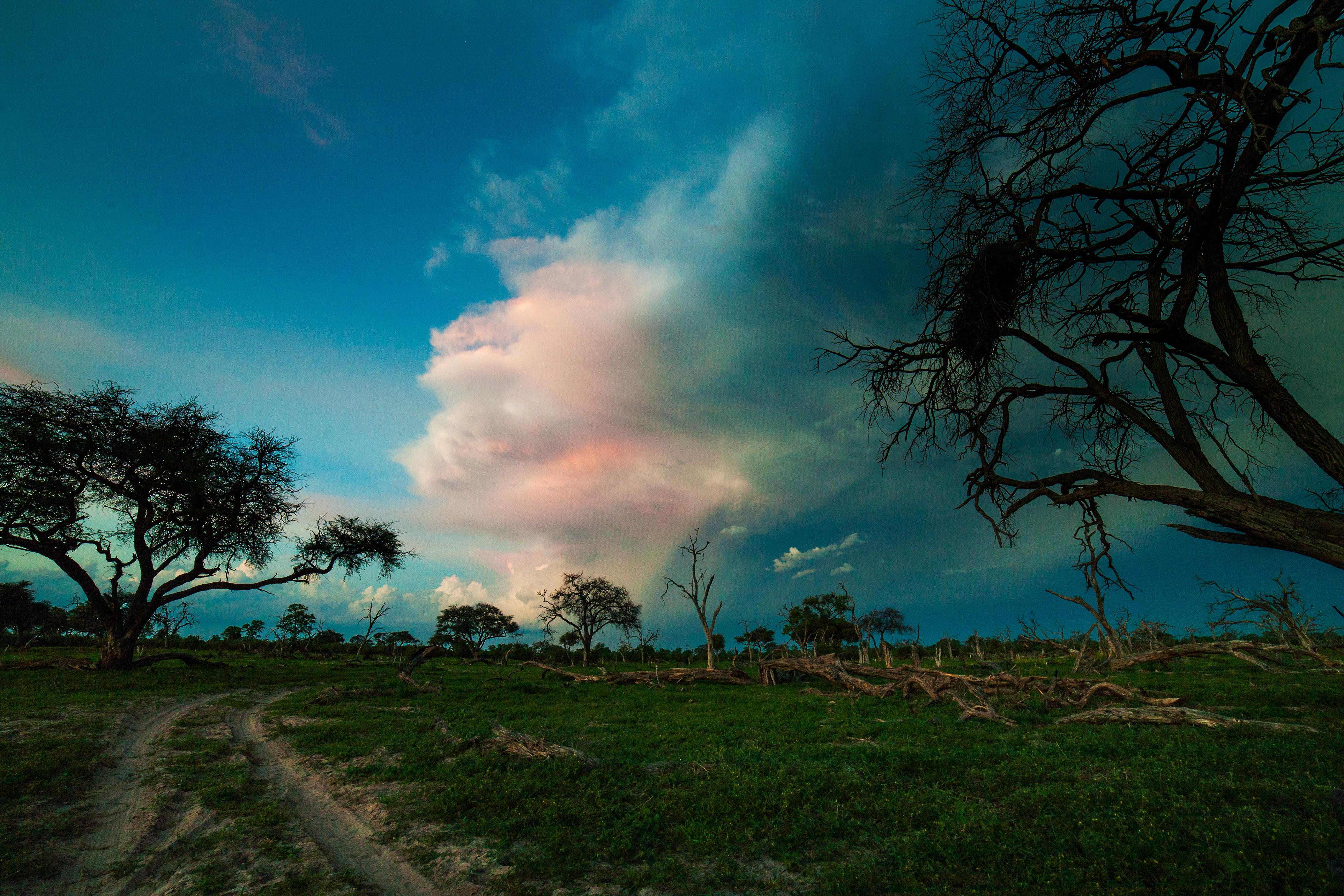 Capturing the beauty of Botswanas Okavango Delta.