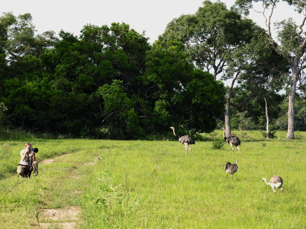 Pantanalsafari - Landschaft