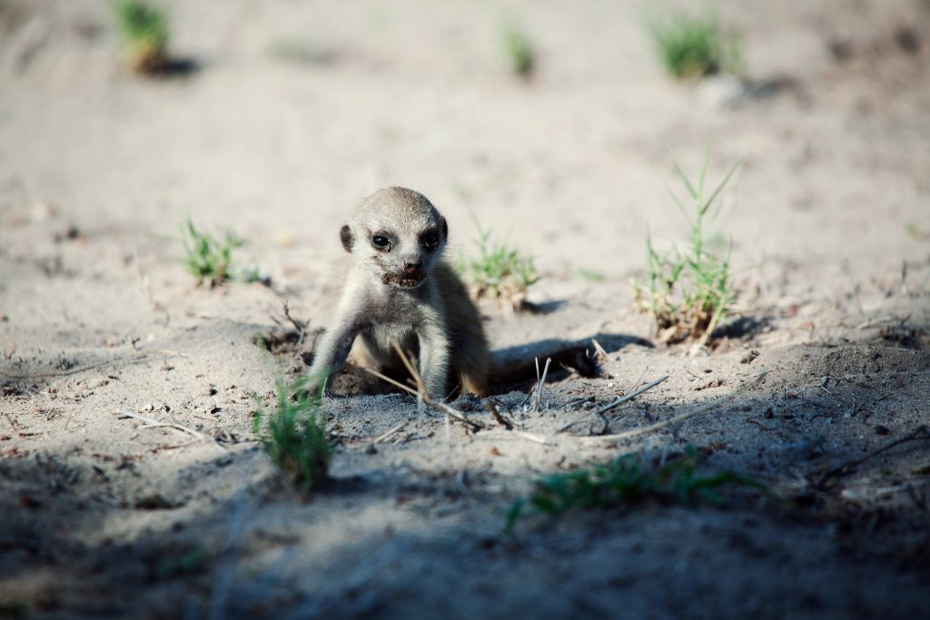 CM Travels: Botswana | Okavango Delta | Savuti | Safari | Lion | Africa | Photo Safari