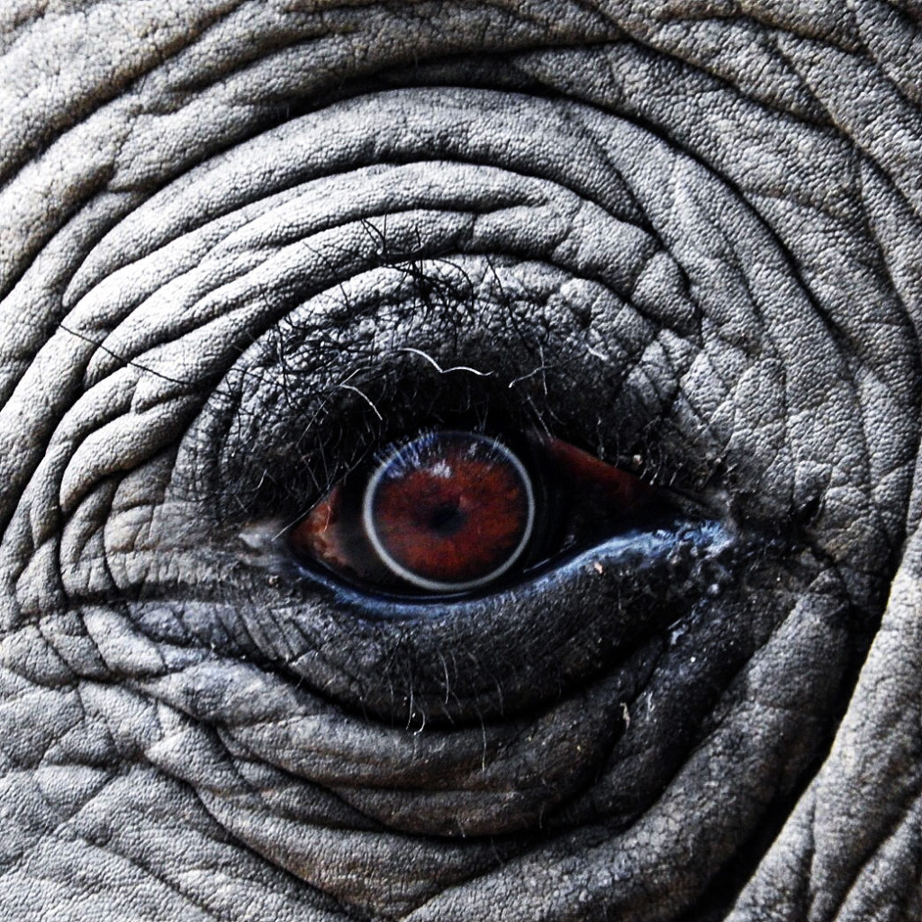 CM Travels: Elephant Eye | Wildlife | Travel | Safari | Nature