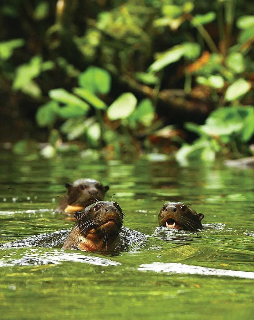CM Travels | Ecuador | Giant Otters | Napo Wildlife Center