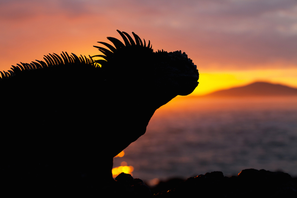 CM Travels | Galapagos Sunset