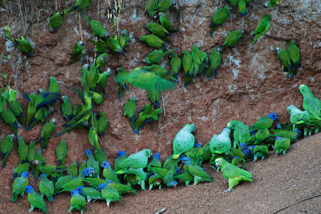 CM Travels | Anangu Yasuni National Park Ecuador | Clay Lick