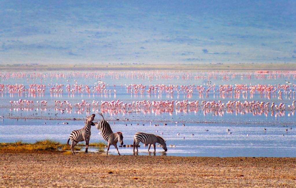 CM Travels | Tanzania | Family Safari | Zebras and flamingos in the Ngorongoro Crater