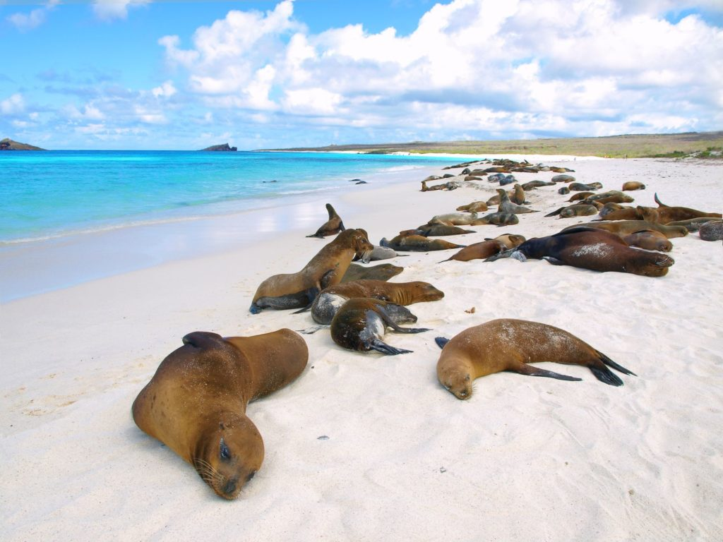 CM Travels | Galapagos | Resting Sea Lions