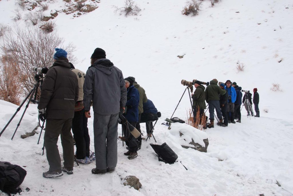 CM Travels | Snow Leopard Searching | Snow Leopard Conservancy