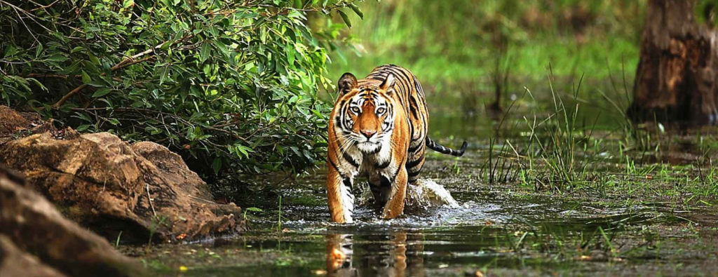 CM Travels | Bandhavgarh National Park