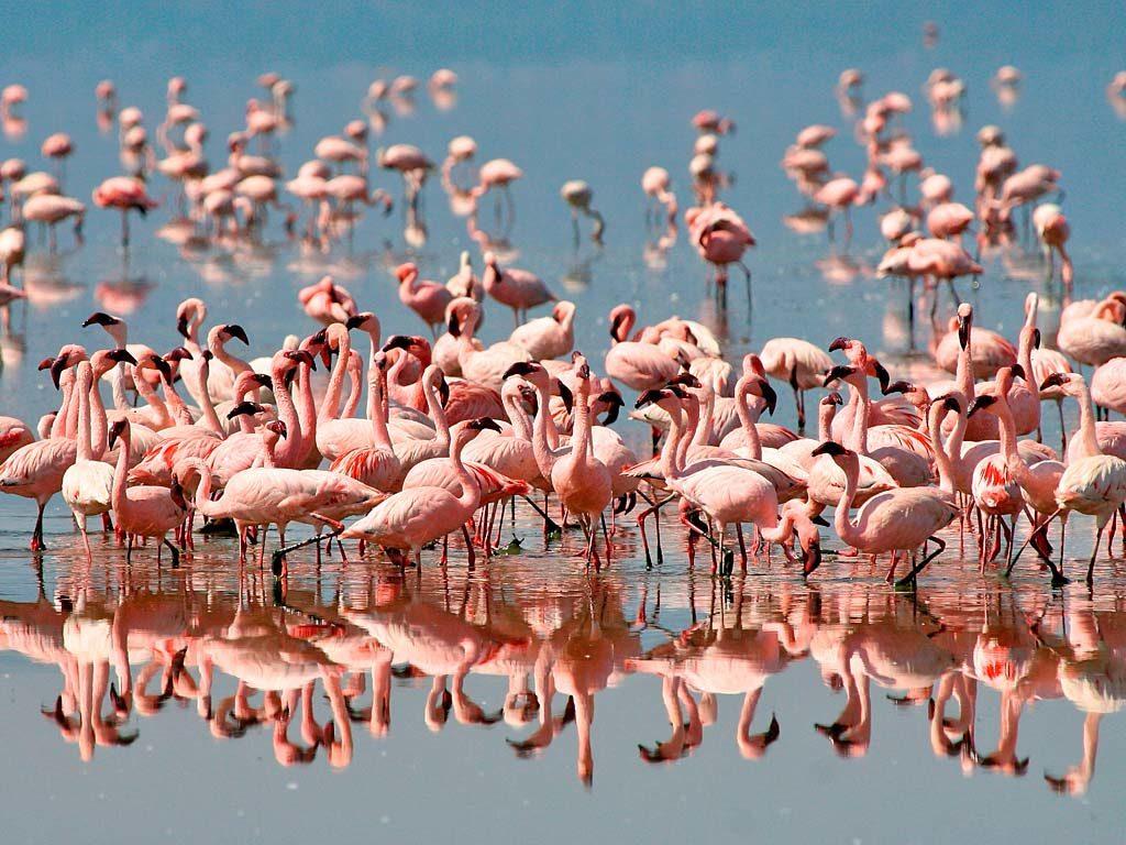 CM Travels | Lake Manyara | flamingo-at-lake-manyara
