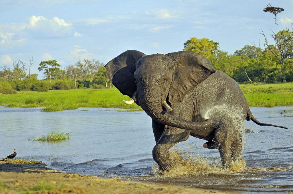 CM Travels   Botswana   Private Safari   Elephant-bathing-in-Khwai