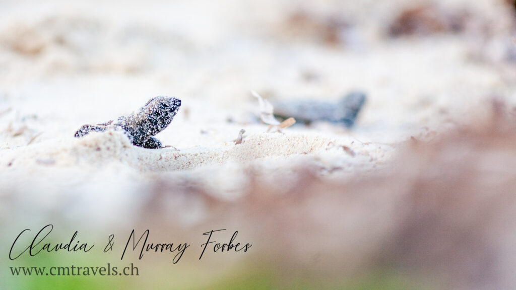 CM Travels | Bird Island | Hatchlings