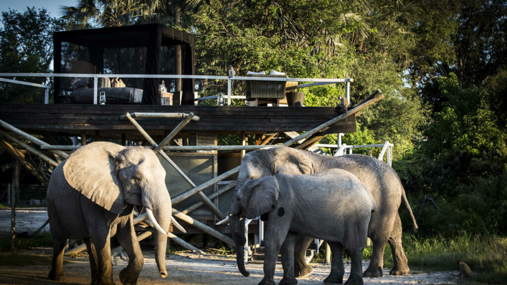 CM Travels | Wilderness Safaris | Abu Camp 2