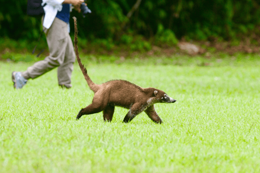 CM Travels | Claudia with Coati
