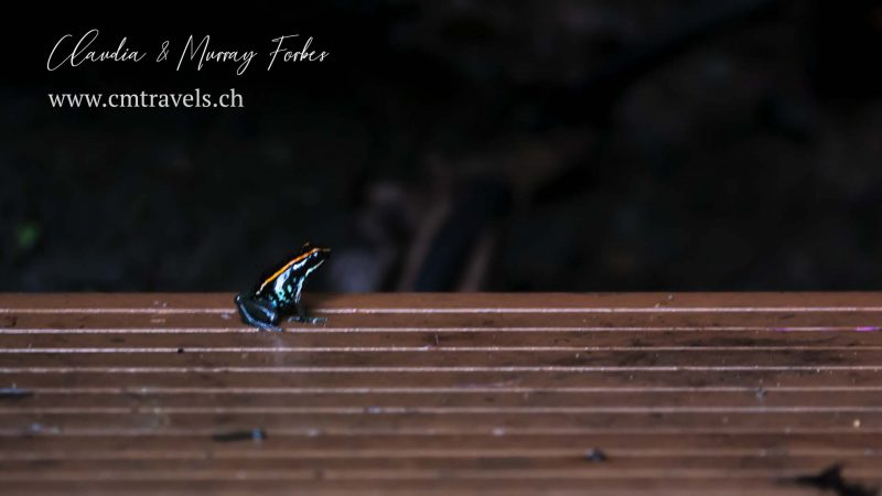 Costa-Rica-CM-Travels-Golfo-Dulce-Poison-Frog
