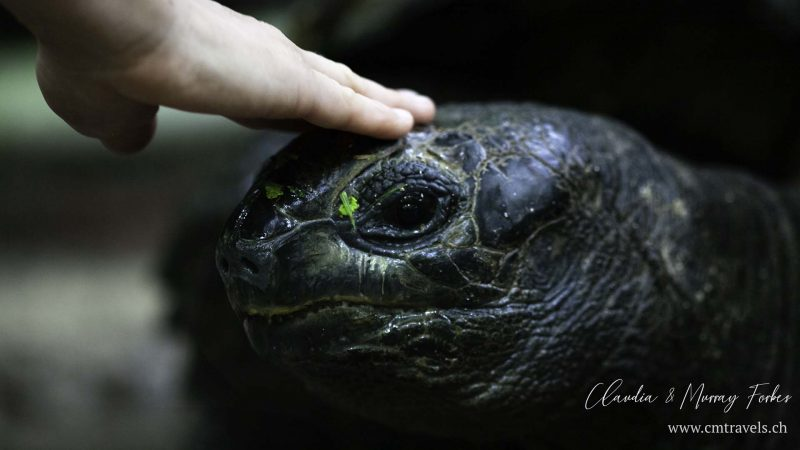 Bird-Island-CM-Travels-Tortoise-with-hand