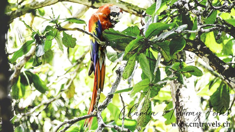 Costa-Rica-CM-Travels-Macaw-Feeding