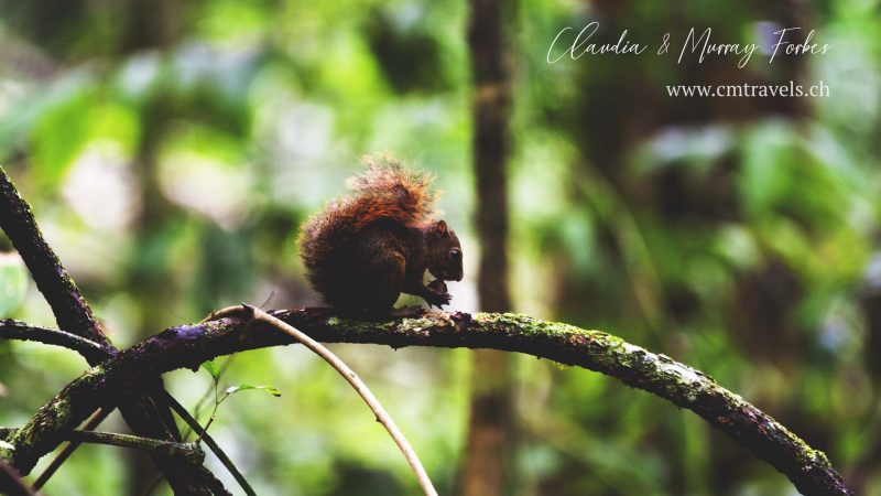 Costa-Rica-CM-Travels-Squirrel