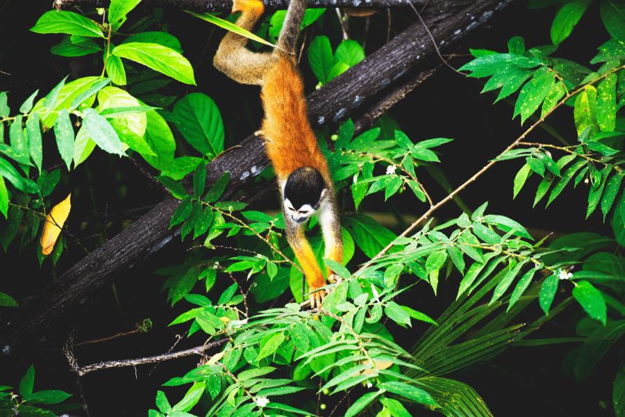 CM Travels | Squirrel monkey