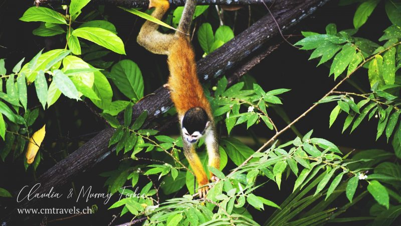 Costa-Rica-CM-Travels-Squirrel-moneky